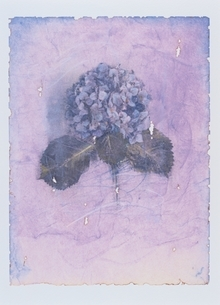 紫のアジサイの花 イラストのイラスト素材 [FYI03171995]