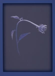 しなやかな花 イラスト(紫)のイラスト素材 [FYI03172003]
