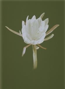 睡蓮のイラスト素材 [FYI03172009]