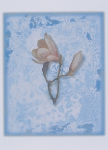 植物 モクレンのイラスト素材 [FYI03172013]