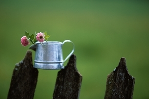 柵の上の花の写真素材 [FYI03172099]