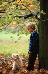 木に寄り添う少年と犬の写真素材 [FYI03172106]