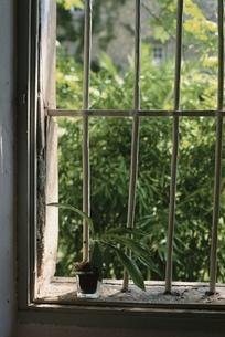 室内の格子窓にある植木鉢と外の植物の写真素材 [FYI03172119]