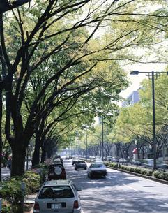 新緑の原宿表参道 東京都の写真素材 [FYI03172670]