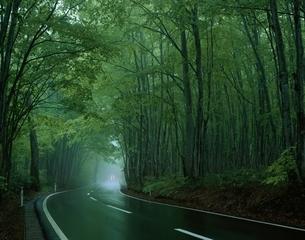 新緑のブナ林と道路   八甲田 青森県の写真素材 [FYI03172694]