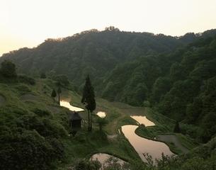 夜明けの棚田と山 松之山町 新潟県の写真素材 [FYI03172870]