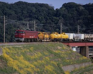 菜の花の群生と貨物列車の写真素材 [FYI03173108]