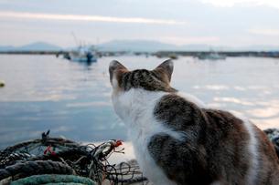 海を見る猫の写真素材 [FYI03173159]