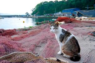 網と猫の写真素材 [FYI03173160]