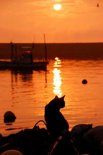 朝の猫の写真素材 [FYI03173163]