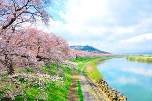 船岡・一目千本桜の写真素材 [FYI03173199]