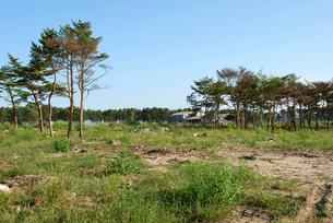 津波に耐えて残った松の樹の写真素材 [FYI03173465]