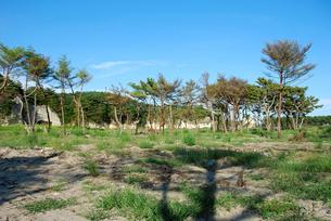 津波に耐えて残った松の樹の写真素材 [FYI03173466]