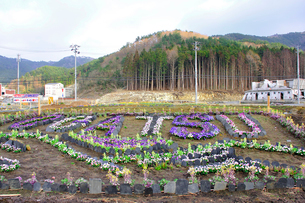 雄勝町の花壇の写真素材 [FYI03173637]