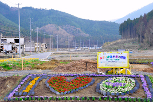 雄勝町の花壇の写真素材 [FYI03173638]