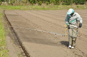 トウモロコシ畑・除草剤散布作業の写真素材 [FYI03173660]