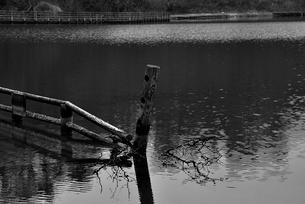 奥松島・水没した柵の写真素材 [FYI03173782]