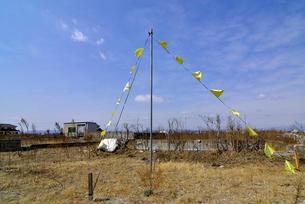 住宅跡地に掲げられた希望の黄色いハンカチの写真素材 [FYI03173794]