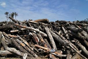 被災した更地に積み上げられた木々の写真素材 [FYI03173798]