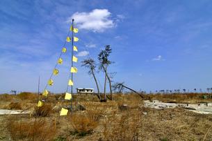 住宅跡地に掲げられた希望の黄色いハンカチの写真素材 [FYI03173803]