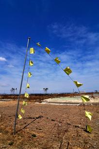 住宅跡地に掲げられた希望の黄色いハンカチの写真素材 [FYI03173814]