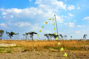 住宅跡地に掲げられた希望の黄色いハンカチの写真素材 [FYI03173818]