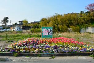「咲かせよう勇気の花」の花壇の写真素材 [FYI03173836]