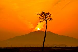 希望の一本松と朝日の写真素材 [FYI03175008]
