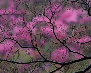 新芽と水滴の写真素材 [FYI03175327]