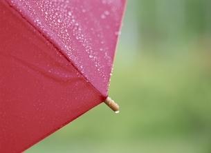 赤い傘の雨の水滴の写真素材 [FYI03175361]