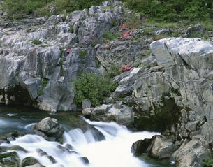 岩ツツジ咲く飛騨川    岐阜県の写真素材 [FYI03175420]