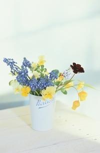 花(チョコレートコスモス・サンダーソニア・ムスカリ・ビオラ)の写真素材 [FYI03175774]