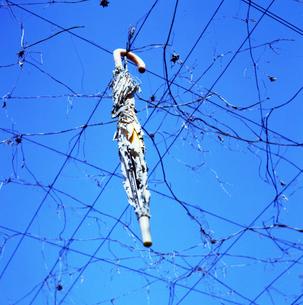ブドウ棚にぶら下がる使い古しの傘の写真素材 [FYI03175992]