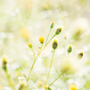 河川敷の雑草の写真素材 [FYI03176217]