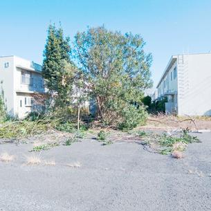 剪定された木立と古い低層集合住宅の風景の写真素材 [FYI03176249]