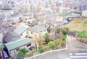 野毛山公園から眺めた横浜市外地の写真素材 [FYI03176328]