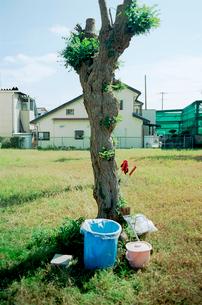 草地の剪定された立ち木と立てかけられた清掃用具の写真素材 [FYI03176347]