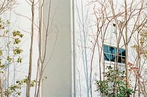 白色の瀟洒な住宅の側面に影を落とす庭木の写真素材 [FYI03176375]