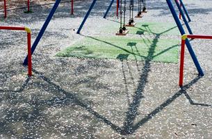 桜の花びらで覆われた児童公園のブランコの写真素材 [FYI03176402]