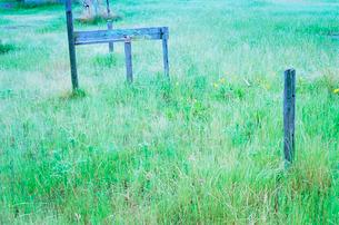 草におおわれた空き地の写真素材 [FYI03176486]
