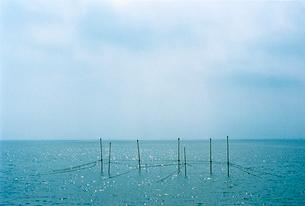 三河湾に立つ漁業用の細い杭とその頂にとまる鳥の写真素材 [FYI03176522]