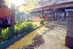 イチョウの落葉に染まる東京都心の歩道の写真素材 [FYI03176600]
