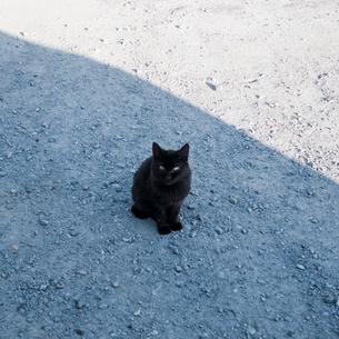 日陰に座る黒猫の写真素材 [FYI03176631]