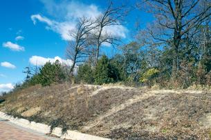 新興住宅地脇の冬枯れの雑木林の写真素材 [FYI03176635]