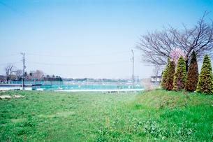 湘南丘陵地の春の写真素材 [FYI03176669]