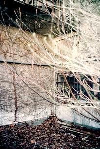 廃工場敷地の枯れ葉と枯れ枝の写真素材 [FYI03176681]