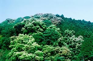 緑の濃い山の写真素材 [FYI03176724]