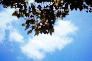 木陰から見上げる空の写真素材 [FYI03176804]