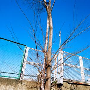 冬枯れの街路樹の写真素材 [FYI03176885]