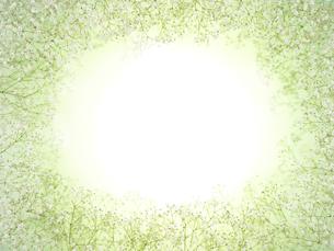 かすみ草のバックグラウンドイメージの写真素材 [FYI03177094]